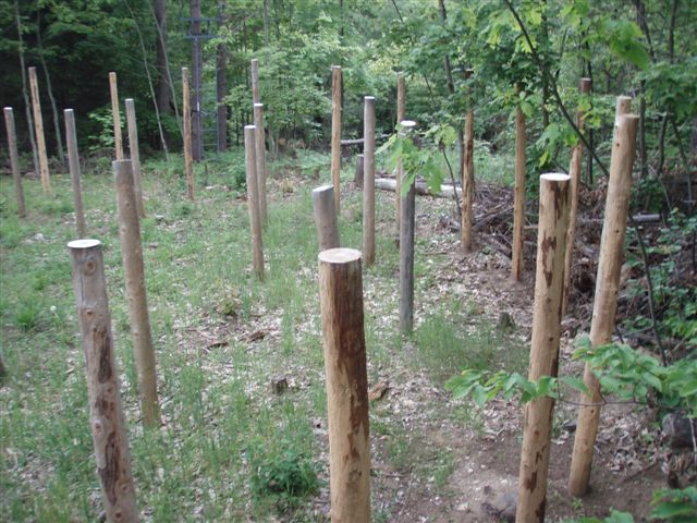 Forest Woodhenge - the West Side