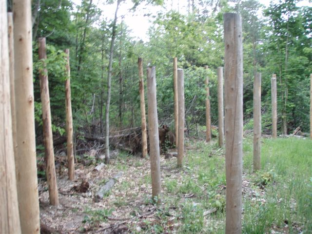 Forest Woodhenge - the Eastern edge