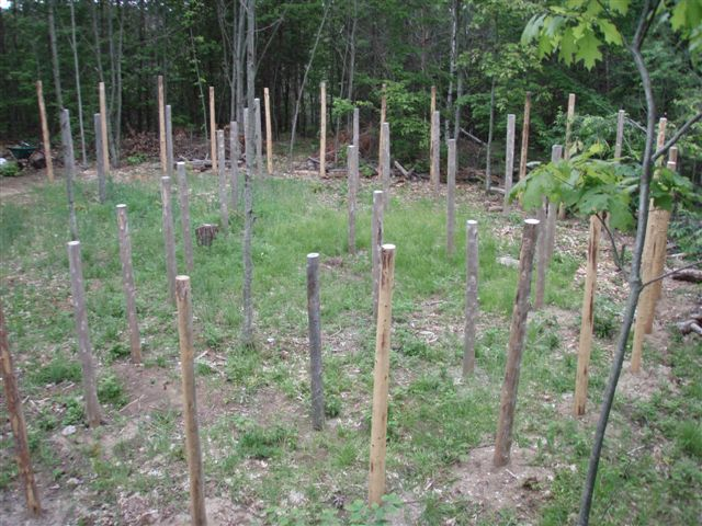 Forest Woodhenge - the Eastern Half!