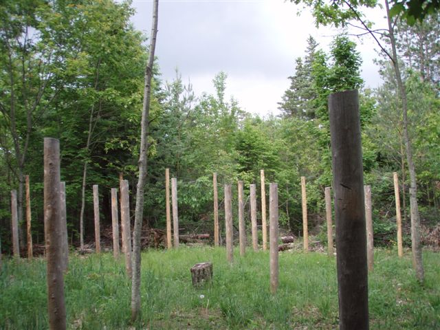 Forest Woodhenge - Looking East