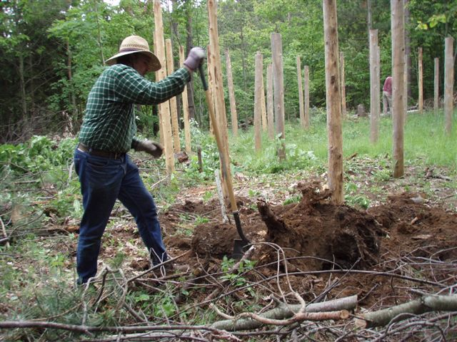 Forest Woodhenge - Bill Frey moving the big stump!