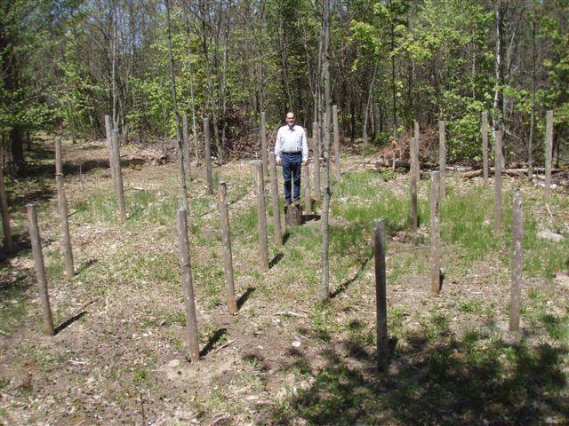 Forest Woodhenge - True Noon - Bill Frey