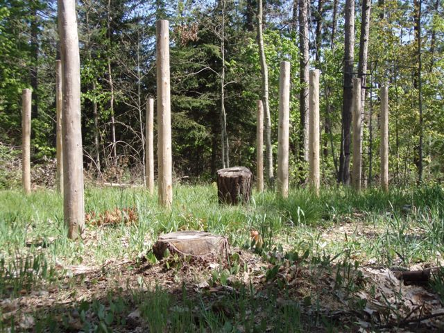 Forest Woodhenge - Stumps!