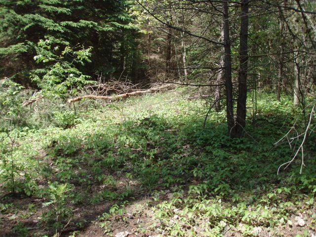 Forest Woodhenge - Poinson Ivy Pathway!