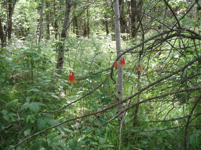 Forest Woodhenge - Wild Flowers 3