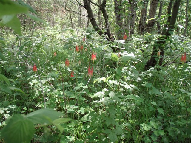 Forest Woodhenge - Wild Flowers