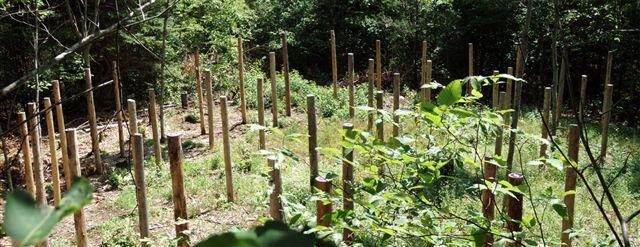 Forest Woodhenge - 5 circles!!