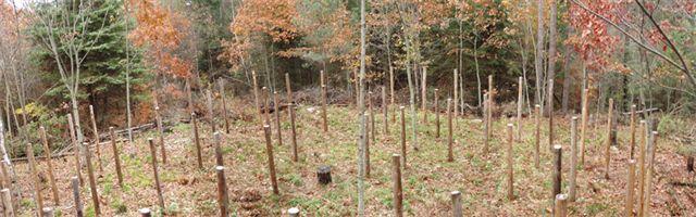 Forest Woodhenge - Scorpio - East View