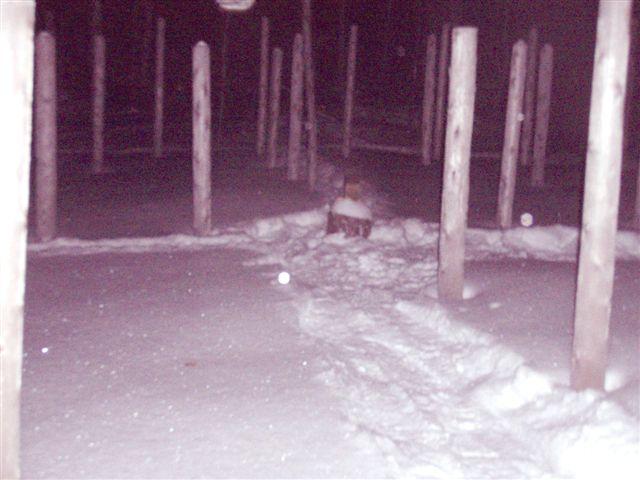 Forest Woodhenge - Winter Solstice - Meditation -centre (2)
