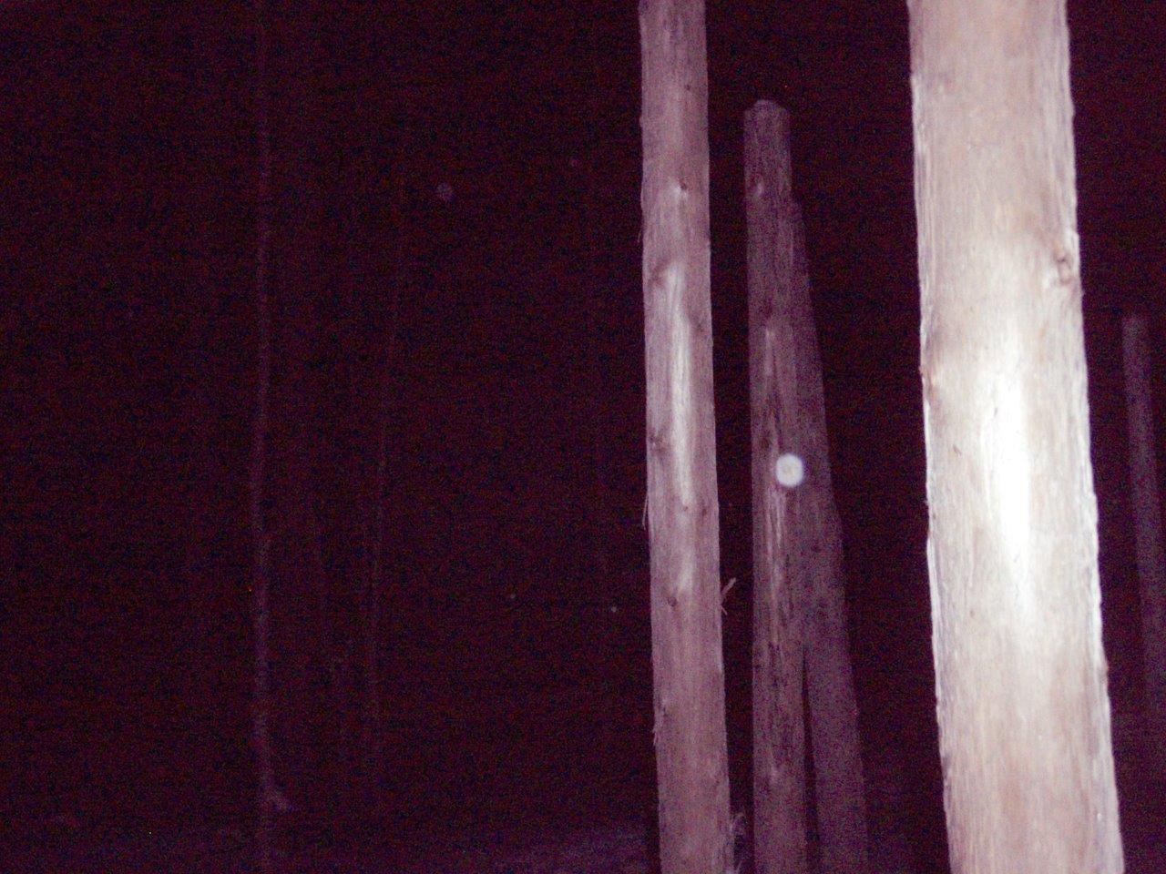 Forest Woodhenge - Solstice Meditation (6)