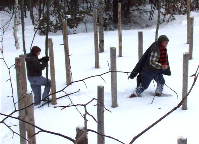 Forest Woodhenge midwinter