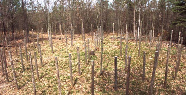 Woodhenge Midspring at Noon