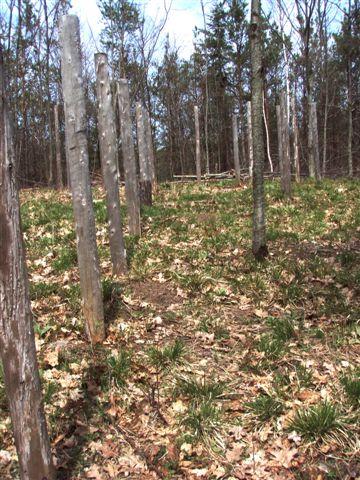 Woodhenge Midspring at Noon (4)