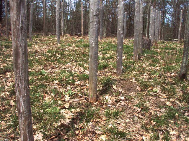 Woodhenge Midspring at Noon (5)