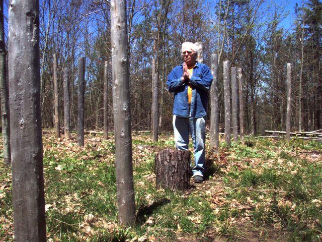 Forest Woodhenge True Noon - Robin