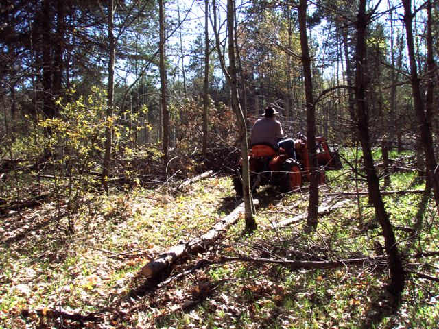 Cutting and Haulin' Trees! (3)