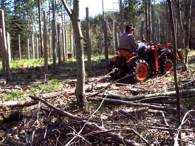 Cutting and Haulin' Trees! (4)