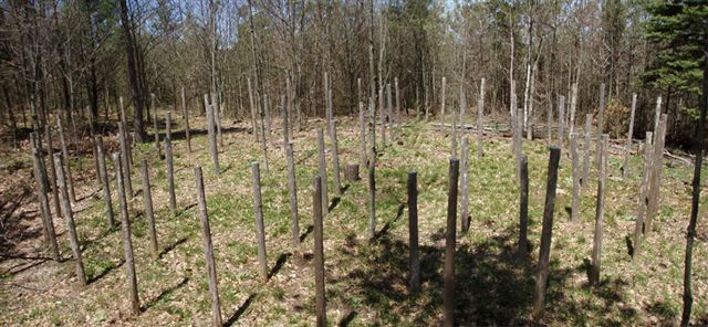 Forest Woodhenge True Noon