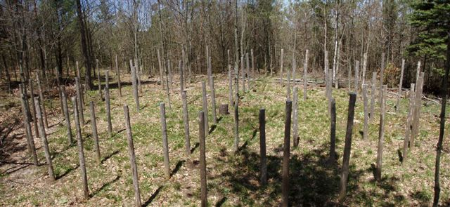 Forest Woodhenge True Noon (2)