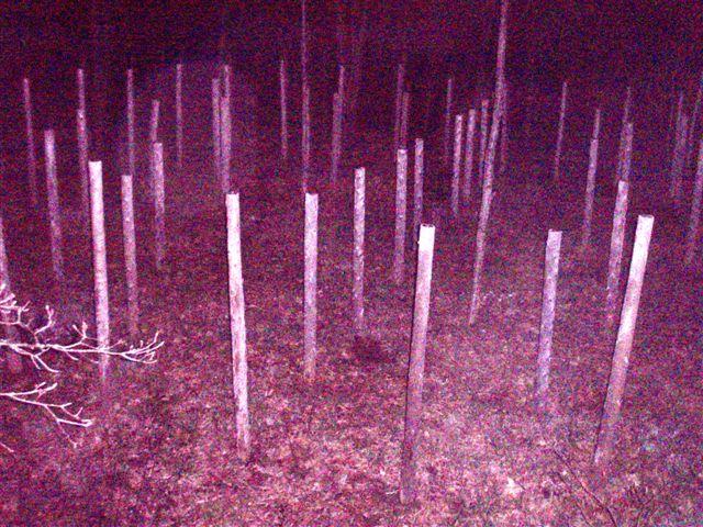 Woodhenge Full Moon at Midnight!