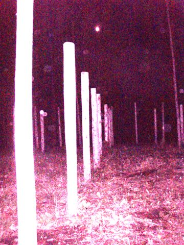 Woodhenge Full Moon at Midnight! (3)