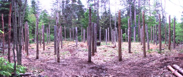 Forest Woodhenge on Arrival