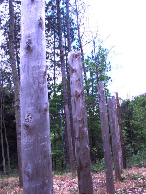 Forest Woodhenge West View!