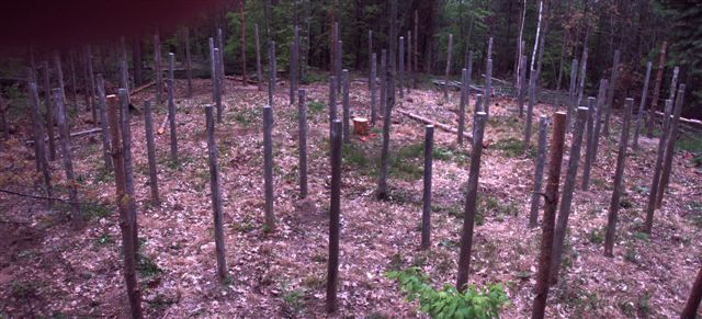 Forest Woodhenge - Posts without holes!