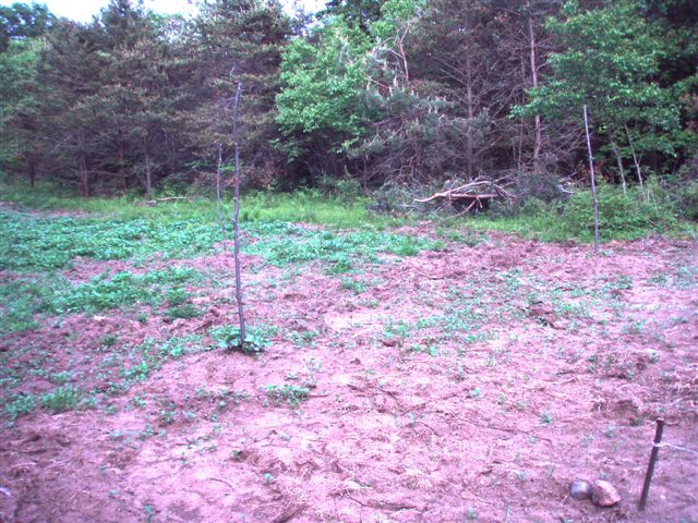 Woodhenge Garden (3)