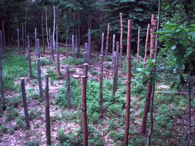 Forest Woodhenge - East Side