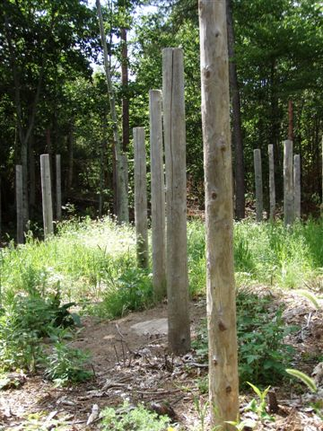 Forest Woodhenge - Midsummer (15)