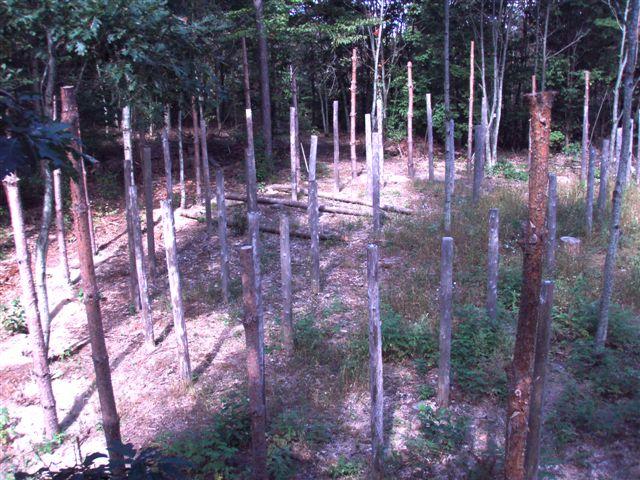 Forest Woodhenge Postholes (4)