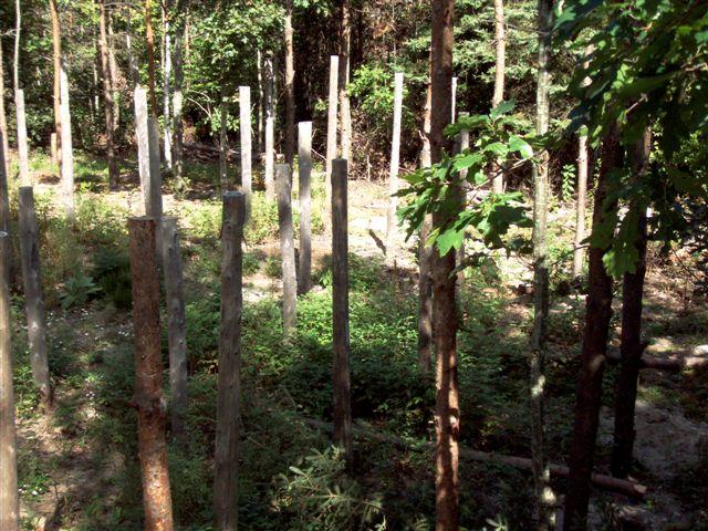 Forest Woodhenge Postholes (1)