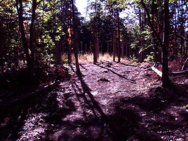 Forest Woodhenge Sept. 24, 2009 (1)