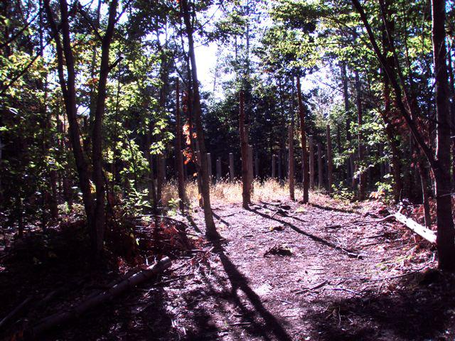 Forest Woodhenge Sept. 24, 2009 (3)