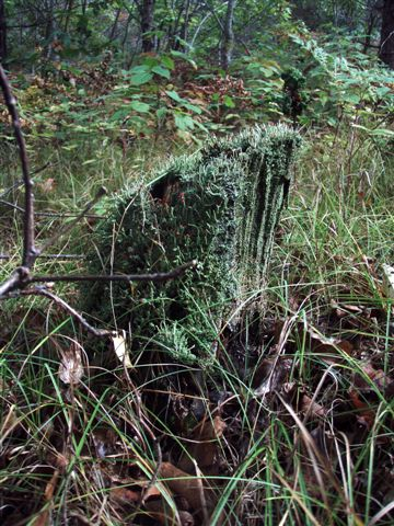 Forest Wonders: Moss Covered Stump (2)
