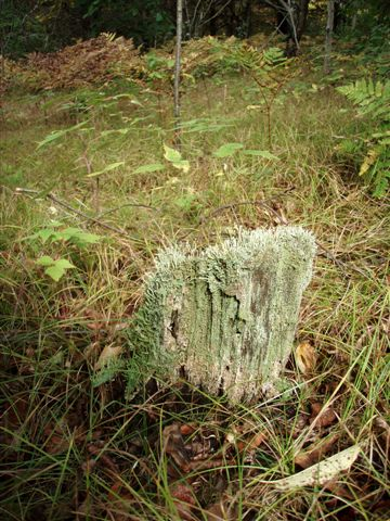 Forest Wonders: Moss Covered Stump (3)
