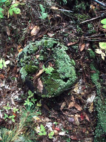 Forest Wonders: Moss Covered Stump (4)