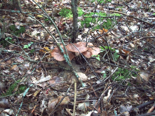 Forest Wonders: Mushrooms (3)