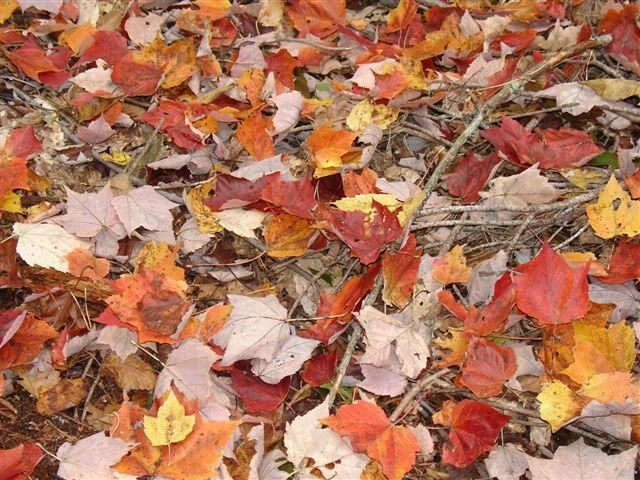 Fall Colours (4)