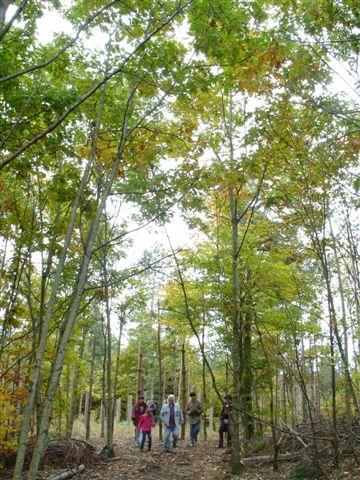 Leaving the Woodhenge