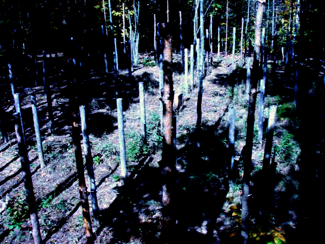 Forest Woodhenge: Noon plus 3 minutes!