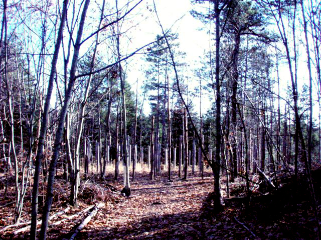 Forest Woodhenge-MidFall - Entrance