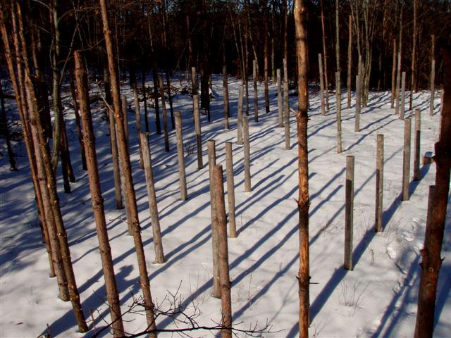 Forest Woodhenge: Winter Solstice: True Noon (2)