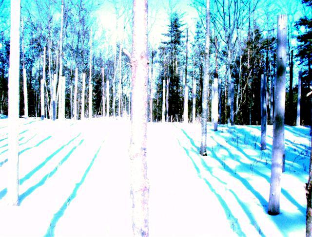 Forest Woodhenge: Winter Solstice: True Noon (5)
