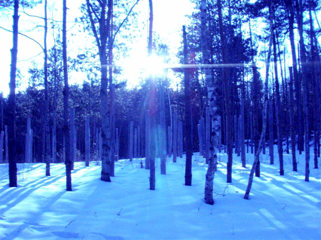 Forest Woodhenge - Winter Solstice Sun is Low!