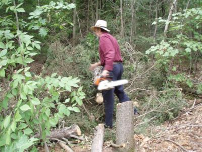 Clearing trees 3
