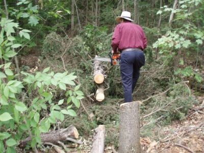 Clearing trees 4