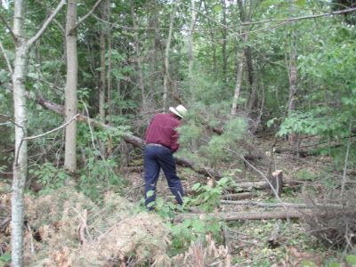 Clearing trees 8