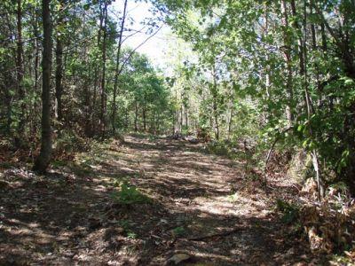 Pathway to Woodhenge